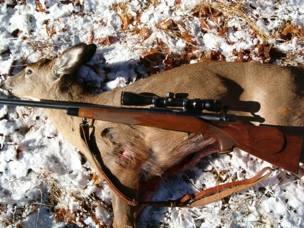 700-deer-803.jpg